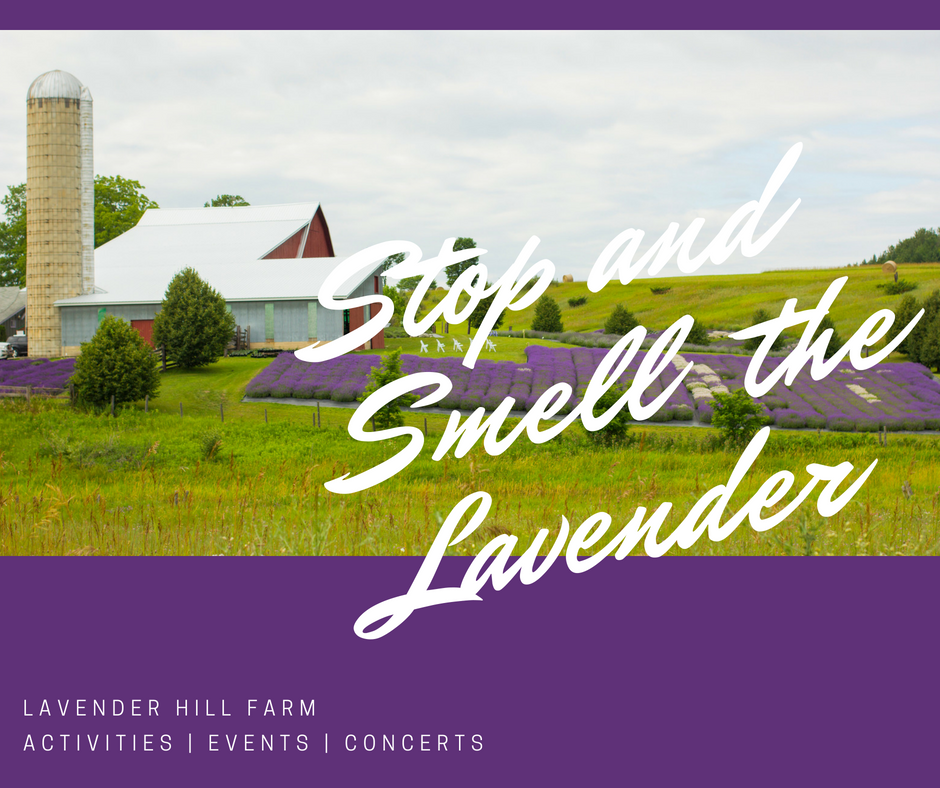 093a85cf910 Stop and enjoy the fresh smell of lavender at Lavender Hill Farm